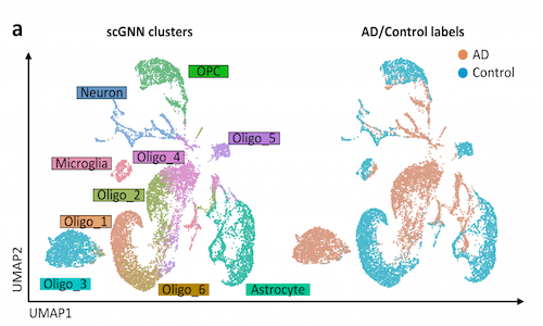 An infographic showing a general example of a type of visual that a graph neural network can create with provided biological data.